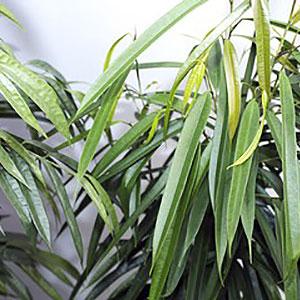 menue-textilpflanzen